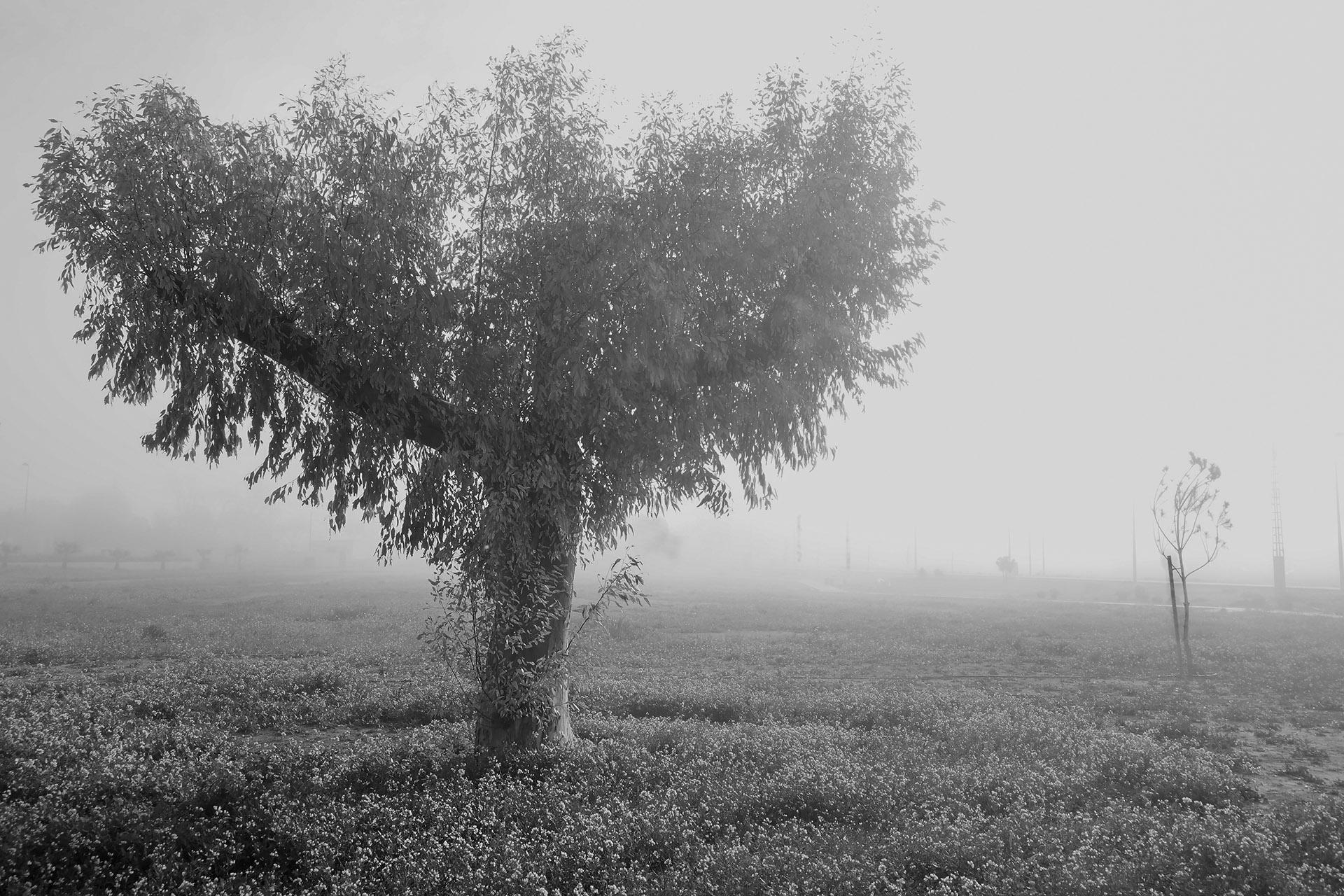 Árbol de las desdichas